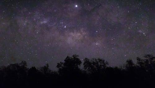 trevinca starlight