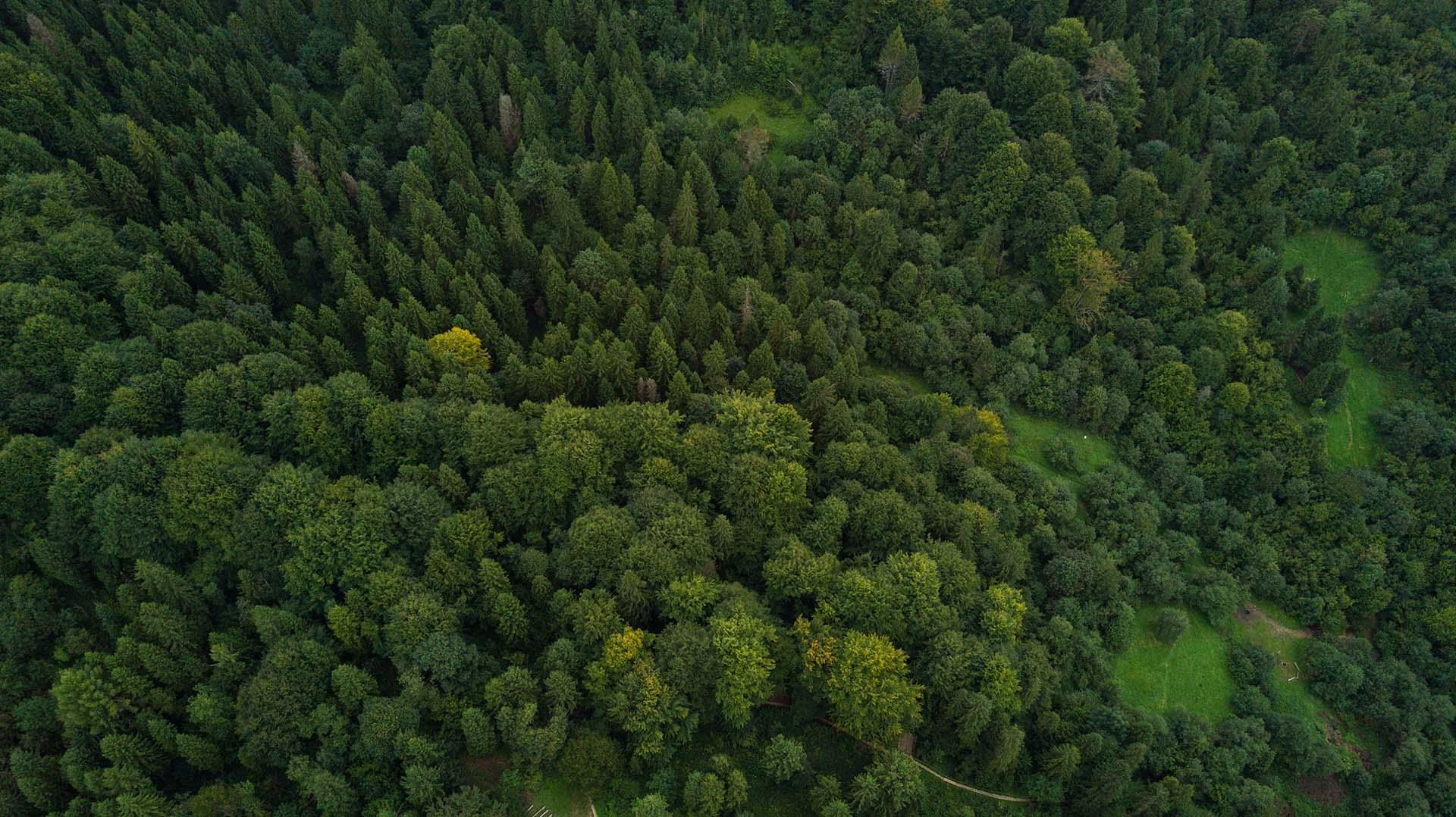 ruteart sostenible