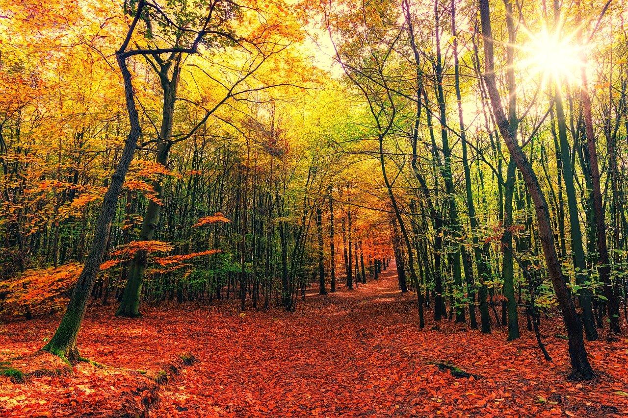 otoño-courel